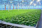 Посевная обработка семян с микроудобрением ABFerta