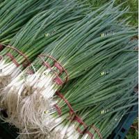 Герда семена лука на перо среднераннего 65-70дн. Semo 50 г