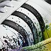 Мужские кроссовки Adidas Superstar Supercolor (Адидас Суперстар) белые, фото 5