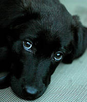 Болезни собак которые можно лечить дома.