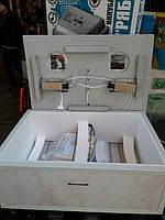 Автоматический инкубатор Курочка Ряба 60 яиц ламповый ПЛАСТИКОВЫЙ корпус