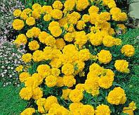 Бархатцы Желтый жакет 0,5г