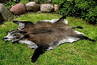 Натуральная шкура дикого кабана