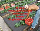 Агроволокно p-50g 3.2*50м черное AGREEN 4сезона Итальянское качество, фото 4