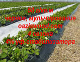 Агроволокно p-50g 1.6*100м черное AGREEN 4сезона Итальянское качество, фото 9