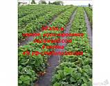 Агроволокно p-50g 1.6*100м черное AGREEN 4сезона Итальянское качество, фото 10