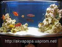 Разработкой дизайнов пресноводных аквариумов