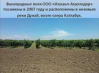 Сельскохозяйственное предприятие село Суворово