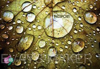 Обложка на паспорт Роса, фото 2