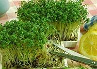 Салат кресс 1г