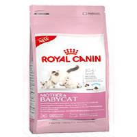 Royal Canin Mother&Babycat для котят до 4 месяцев, беременных и кормящих кошек