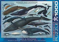 """Пазл """"Киты и дельфины"""", 1000 элементов, EuroGraphics"""