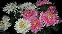 Хризантема с напылением, разные цвета, выс. 43 см., 10 шт. в упаковке, 24.30 гр.