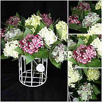 Гортензия одинарная - интерьерные цветы, разные цвета, выс. 46 см., 75/65 (цена за 1 шт. + 10 гр.)