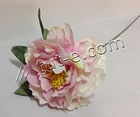 Ветка нежно-розового пиона