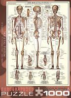 Пазл Скелет человека, 1000 элементов, EuroGraphics