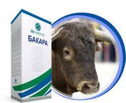 Семена сахарной свеклы / насіння цукрового буряка Бакара  SESVanderHave 100000 сем.