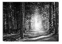 Светящиеся картина Startonight Лес Черно Белые Пейзаж Природа Печать на Холсте Декор стен Дизайн дома Интерьер, фото 1