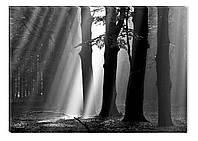 Светящиеся картина Startonight Луч Солнца Черно Белые Природа Печать Холст Декор стен Дизайн дома Интерьер