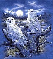 Набор алмазной вышивки KLN Белые ночные совы 30 х 40 см (арт. FS434)