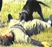 Дрессировка собак любых пород в Киеае