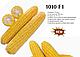 Семена кукурузы LS 1010 F1 2500 семян Lark seeds, фото 3