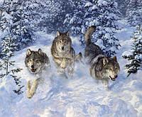 Набор алмазной вышивки KLN Свободные волки 50 х 40 см (арт. FR438)