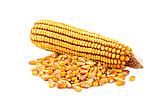 Кукуруза кормовая Солонянский 298 СВ, фото 2