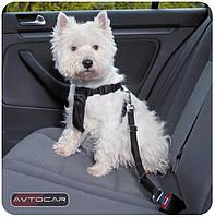 Автомобильный ремень безопасности Trixie ✓ размер: M ✓ для собак 50-70 см., фото 1