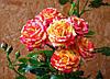 Роза спрей Fair-Flesh (Фиар Флеш)