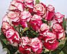 Троянди чайно-гібридна Свитнес