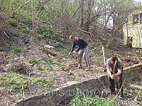 Расчистка участков от зарослей.(066)4327255 Удаление деревьев Киев.