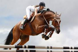 Конный спорт, верховая езда