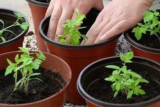 Горшки, кассеты для рассады и растений пр. Польша
