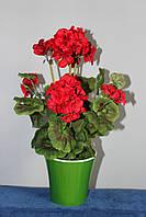 Герань(Калачик) красная искусственная в вазоне