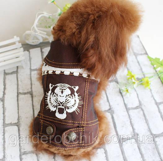 """Куртка, пиджак """"Тигр"""" для собаки. Одежда для собак. Толстовка"""