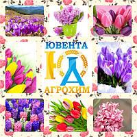 С Международным женским днем! С 8 марта!!!