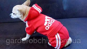 """Комбинезон, толстовка """"АДИДОГ"""" для собак, кошек.  Одежда для собак Adidog"""