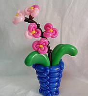 Орхидея в вазе из воздушных шаров