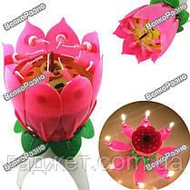 Раскрывающаяся музыкальная свеча для торта - Цветок / Музыкальная свеча Цветок Лотоса, фото 2