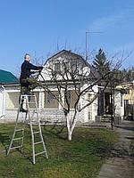 Глубокая обрезка деревьев Глубокая омолаживающая обрезка, фото 1