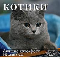 Календарь.Котики: Лучшие кото-фото. 365 дней в году,Киев