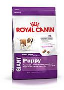 Royal Canin Giant Puppy 17 кг для цуценят гігантських порід до 8 місяців