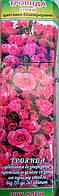 Роза спрей Pink Flash (Пинк Флеш), фото 1
