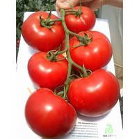 Семена томата Махитос (Mahitos RZ) F1 Rijk Zwaan 100 семян