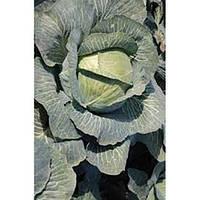 Семена капусты белокочанной Флексима (Flexima RZ) F1 1000 семян