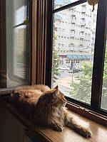 Усиленная защитная сетка Banzai Антикошка на окна для Котов + защита от москитов