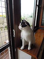 Защитная решётка Banzai на окна для Котов