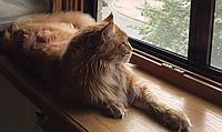 Защитная сетка Banzai Антикошка на окна для Котов + защита от москитов