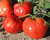 Бычье сердце красное томат